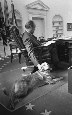 11/07/1974 – the White House – Oval Office – Gerald R. Ford, Liberty - GRF seated at desk, reading documents; dog lying next to chair - Pet Golden Retriever